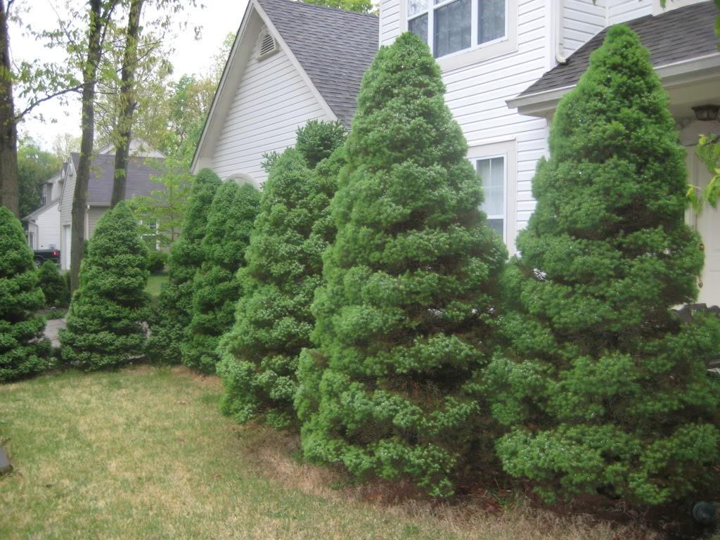 Какие деревья можно сажать во дворе дома