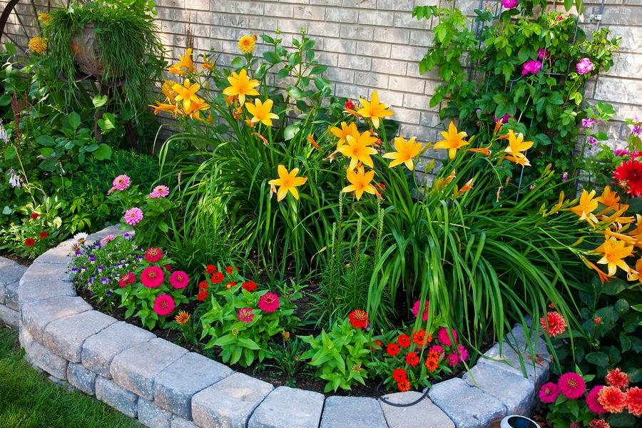 Какие растения сажать во дворе? Фото и названия цветов, трав и кустарников