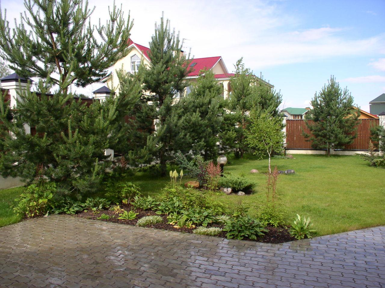 Посадка сосны осенью из леса, выбор деревца, подготовка места на участке, уход