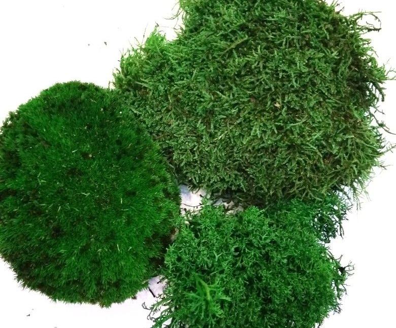 Растения декоративного мха